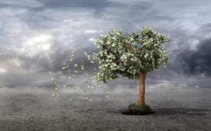 Money Tree Drought